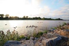 Nuoto via Immagine Stock Libera da Diritti