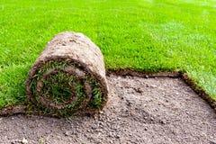 Nuova erba Immagini Stock