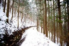 Nuova foresta della neve Immagine Stock