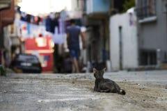 nuova foto del gatto della via 2018 immagini stock libere da diritti