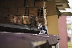 nuova foto del gatto della via 2018 fotografia stock libera da diritti