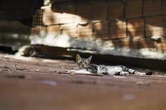 nuova foto del gatto della via 2018 fotografia stock
