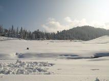 Nuova neve da Gulmarg Kashmir India con l'albero di pino fotografia stock