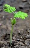 Nuova pianta Immagini Stock Libere da Diritti