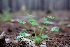 Nuova pianta crescente immagini stock