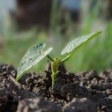 Nuova piccola pianta Fotografia Stock