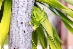 Nuova ramificazione dell'albero di Chan Pha fotografia stock libera da diritti