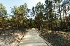 Nuova strada di legno che conduce dalla spiaggia del golfo del Mar Baltico con la sabbia bianca alla foresta della duna con i pin fotografia stock libera da diritti