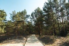 Nuova strada di legno che conduce dalla spiaggia del golfo del Mar Baltico con la sabbia bianca alla foresta della duna con i pin immagini stock libere da diritti