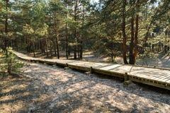 Nuova strada di legno che conduce dalla spiaggia del golfo del Mar Baltico con la sabbia bianca alla foresta della duna con i pin immagine stock libera da diritti