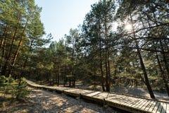 Nuova strada di legno che conduce dalla spiaggia del golfo del Mar Baltico con la sabbia bianca alla foresta della duna con i pin fotografia stock