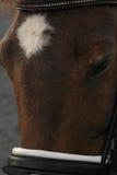 Nuova testa del cavallino della foresta Immagini Stock