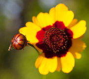 Nuova vespa Fotografia Stock