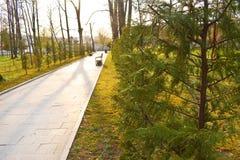 Nuova via e bella pista degli alberi per correre o la camminata ed il riciclaggio per rilassarsi nel parco sul campo di erba verd fotografie stock