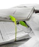 Nuova vita che cresce fuori dal papper riciclato Immagini Stock Libere da Diritti
