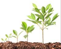 Nuova vita della plantula Fotografia Stock