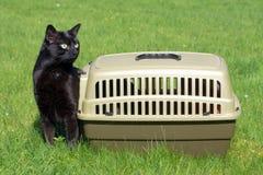 Nuova vita - gatto nero appena fuori dalla sua casella Immagine Stock