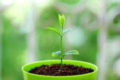 Nuova vita giovane pianta Fotografia Stock