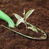 Nuova vita, potere e forza della piccola pianta Immagini Stock Libere da Diritti