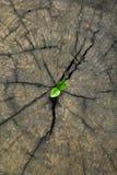 Nuova vita sul legname Fotografia Stock