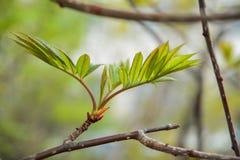 Nuova vita verde Fotografie Stock
