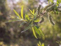 Nuove foglie fresche su un albero Fotografie Stock Libere da Diritti