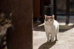 2019 nuove foto smarrite di Cat Photographer, due gatti svegli della via che hidding gioco fotografia stock