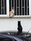2019 nuove foto smarrite di Cat Photographer, due gatti svegli della via immagini stock