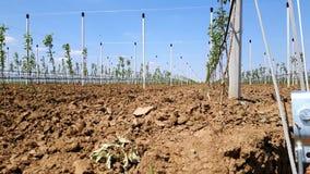 Nuove mele moderne che coltivano sito Immagini Stock