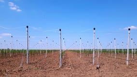 Nuove mele moderne che coltivano sito Fotografia Stock Libera da Diritti