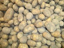 Nuove patate del raccolto accatastate su fotografie stock libere da diritti