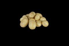 Nuove patate dell'ayrshire Immagine Stock Libera da Diritti
