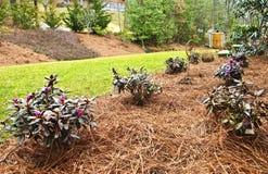 Nuove piantagioni della sorgente in giardino Fotografia Stock