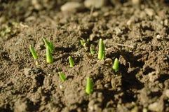Nuove piante Immagini Stock Libere da Diritti