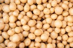 Nuove piccole patate Fotografia Stock