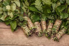Nuove scope per i rami del bagno di una betulla e della quercia sul fondo di legno di marrone scuro Fotografia Stock