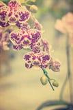 Nuove specie d'annata dell'orchidea su vecchia carta Fotografie Stock Libere da Diritti