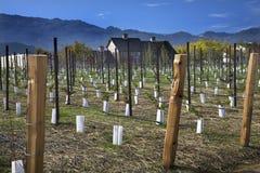 Nuove vigne Napa California della cantina Immagine Stock