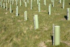 Nuovi alberi Immagine Stock