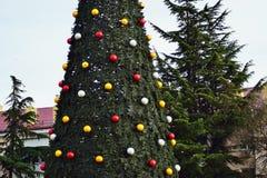 Nuovi rami invasi blu di un albero verde nell'inverno prima del nuovo anno Immagine Stock
