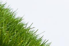 Nuovo angolo sull'erba di iarda del prato inglese fotografia stock libera da diritti