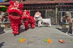 Nuovo anno cinese di Penang, il ballo di leoni Immagine Stock Libera da Diritti