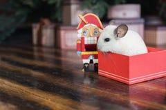 Nuovo anno cinese felice 2020 anni di ratto Ritratto del cincillà bianco sveglio sui precedenti dell'albero di Natale immagine stock