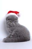 Nuovo anno degli animali domestici Fotografie Stock