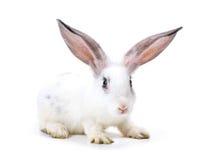 Nuovo anno felice di coniglio immagini stock libere da diritti