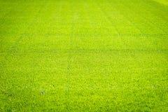 Nuovo campo da giuoco di nuova struttura naturale dell'erba verde Immagine Stock Libera da Diritti