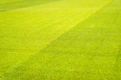 Nuovo campo da giuoco di nuova struttura naturale dell'erba verde Fotografia Stock Libera da Diritti