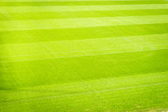 Nuovo campo da giuoco di nuova struttura naturale dell'erba verde Immagini Stock Libere da Diritti