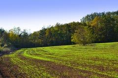 Nuovo campo sviluppato dei raccolti verdi Immagini Stock Libere da Diritti