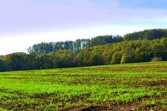 Nuovo campo sviluppato dei raccolti verdi Immagini Stock